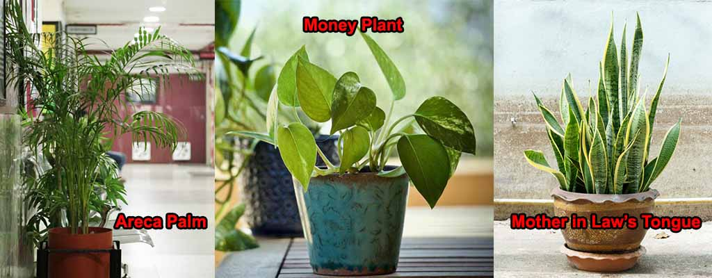 3 Plants to Fight Indoor Pollution